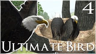 A Magnificent New Nest & Marvelous Mate!! 🐦 Ultimate Bird Simulator - Episode #4