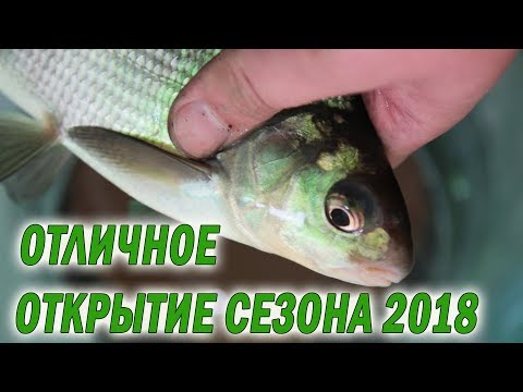 Зимняя рыбалка 2018. Попали на жор подлещика, наловились от души!