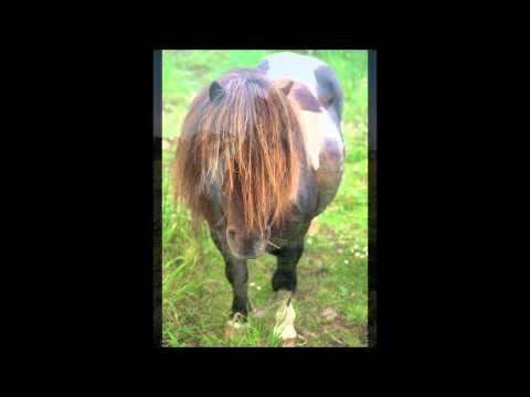 Екатерина Семенова - А пони тоже кони