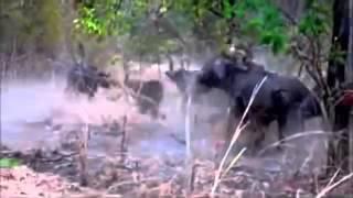 Thế Giới Động Vật Hoang Dã Thiết Minh Tiếng Việt - Cuộc Chiến Sinh Tồn ► Phần  3