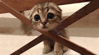 「猫かわいい」 すごくかわいい子猫 - 最も面白い猫の映画 #174