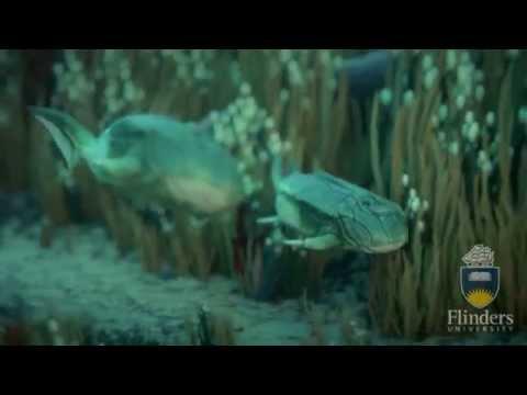 Microbrachius dicki - first-known animal to have sex