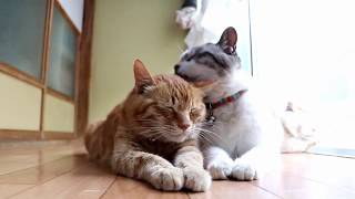 Ласковая кошка и черника - милое видео