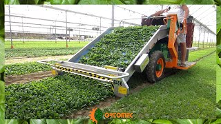 ORTOMEC 8400 electro: Raccolta Spinacino - The Harvesting of Baby Spinach
