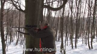 Wild Boar Drive Hunting In Hungary Zala County HD
