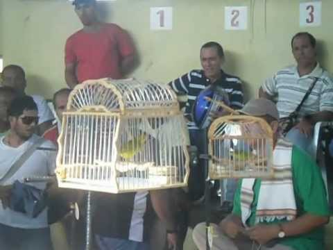 CONCURSO DE CANARIO CRIOLLO EN LORICA CORDOBA-COLOMBIA 2012