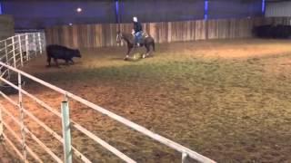 Scotty- Jared Lesh Cowhorses