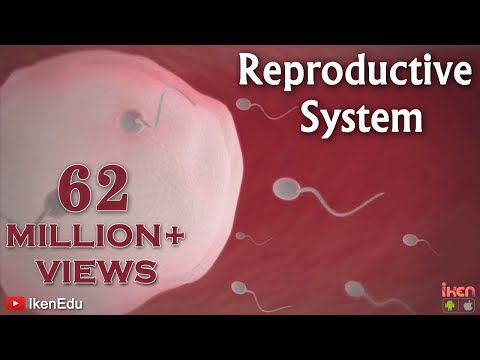 Learn About The Male And Female Reproductive Systems video
