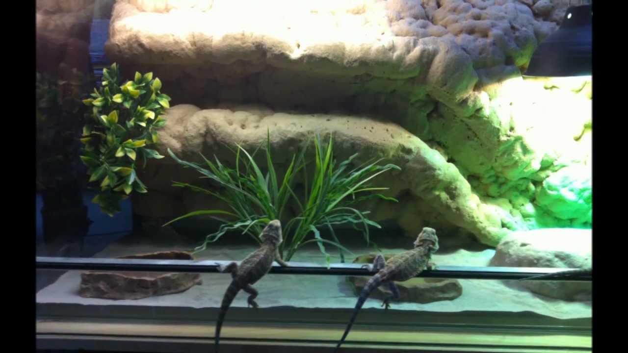 Pogona hd d ccor de fond pour terrarium youtube - Decor fond terrarium desertique ...