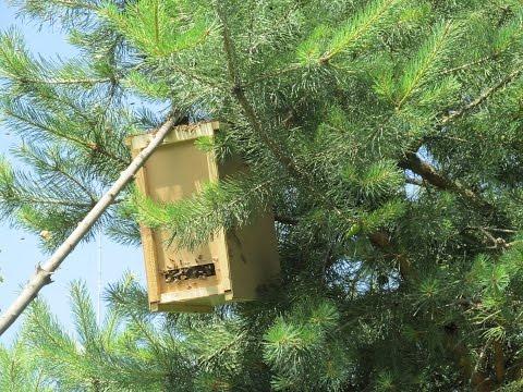 Полювання на рій бджіл