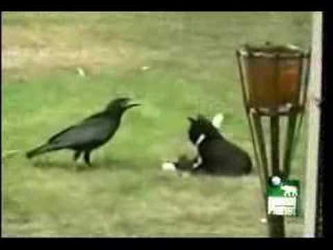Cat Adopts Bird
