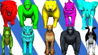 wild animals finger family song for kids | nursery rhymes,children,toddlers,dinosaur,NASH TOON Tv