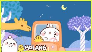 Molang - Safari | Full Molang episodes - Cartoon for kids