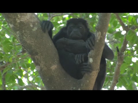 Discover Costa Rica, Vacation Day 1 at Playa Del Tamarindo!