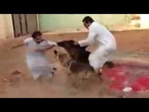 كلب شرس يهاجم ويعض شخص بقوه Music Videos