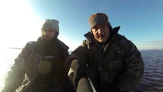 Подводная охота на судака