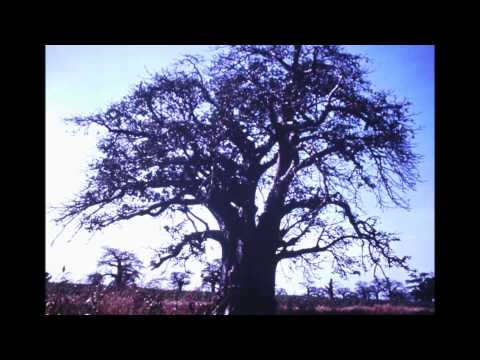 Elvis Presley - Singing Tree