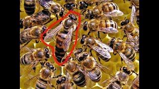 Nằm mơ thấy con ong - Giải mã giấc mơ thấy ong là điềm báo gì ?
