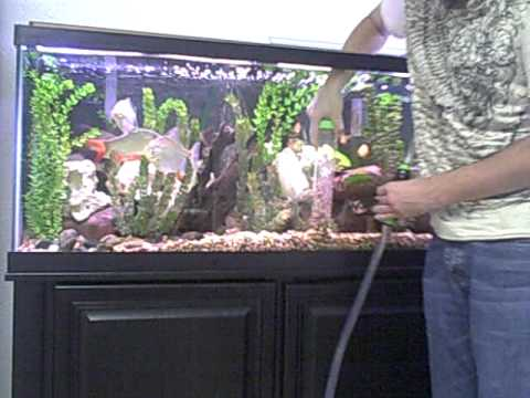 Cleaning fish tank using an auto gravel cleaner youtube for Clean fish tank