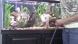 Cleaning fish tank using an Auto Gravel Cleaner