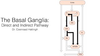 Basal Ganglia: Direct and Indirect Pathway