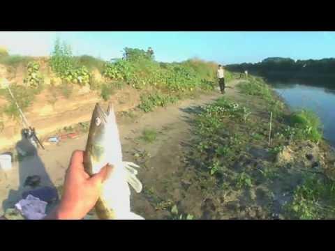 рыбалка на реке дон