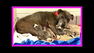 | Dog Rescue StoriesPregnant Pit Bull Discarded In A Dumpster Is Rescued In Time To Give Birth In...