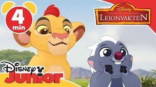 Lejonvakten | Lilla Bunga & Kion ❤️- Disney Junior Sverige