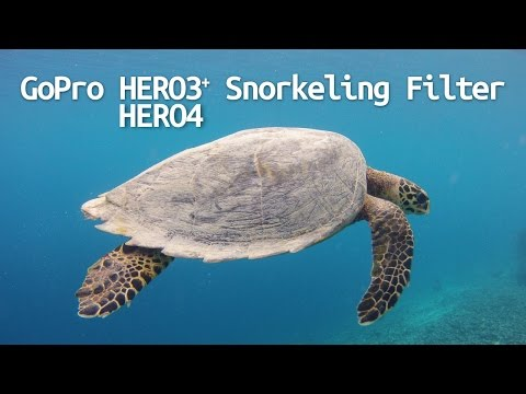 Gopro Hero4 Hero3  Hero3 Snorkeling Filter Comparison   Eelvision Shallow Water Red Filter
