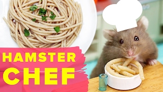 Watch This Hamster Make A Tasty Recipe