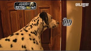 Dalmatian Dog Witnesses A Shocking Betrayal By His Dad