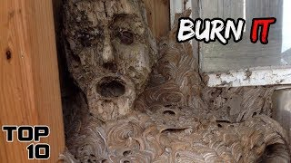 Top 10 Scary Wasp Nests That Need To Be Destroyed