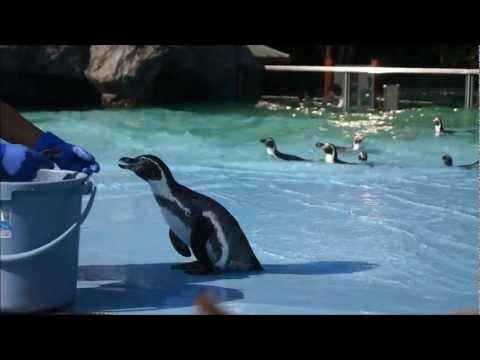 床がツルツル滑り困惑気味なペンギン