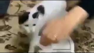 گربه ای که هرگز پاروی قرآن نمیذاره