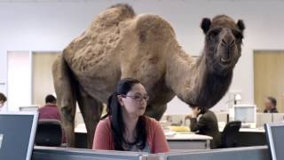 Hump Day Camel Commercial - Happier than a Camel on Wednesday - Hump Daaaay!