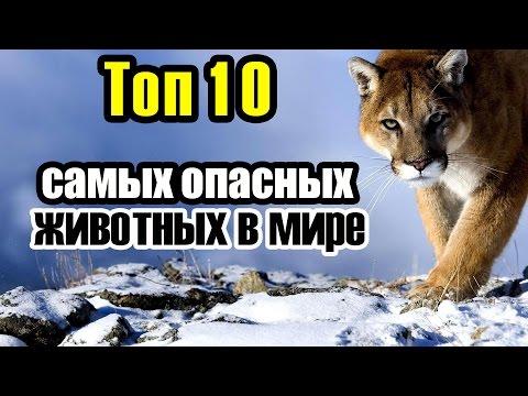 Топ 10 самых опасных животных в мире - Невероятные факты (Чехменок Андрей CheAnD)