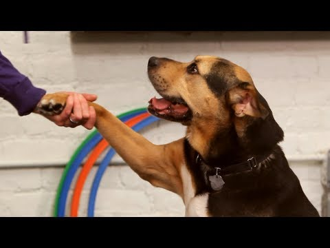 Dog Training / Easy Dog Tricks: Give Paw
