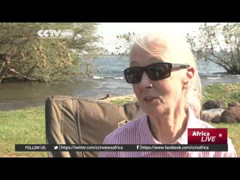 Conservation guru Jane Godall tours Uganda sanctuary
