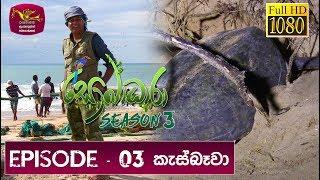 Sobadhara Rupavahini   2019-03-15   Turtle in Sri Lanka