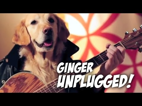 Ginger Unplugged