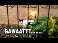 Bahasa Kucing - Ketahuan Mesum