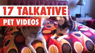 17 Funny Talkative Pets Video Compilation 2017