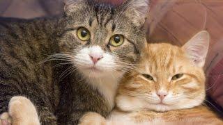 You Should Get A Second Cat