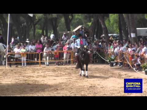 La Palmicha Chipiona 2014 Parada hípica parte 1 HD