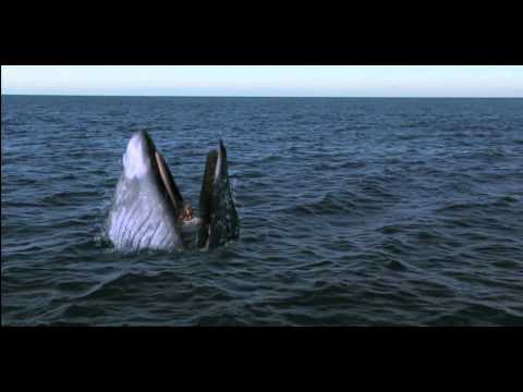 Girl Gets Swallowed By Whale! - Viewer Discretion -