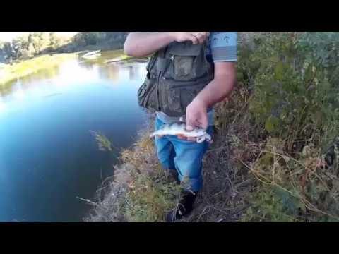 вечерняя рыбалка на реке время