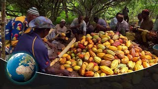 Fair trade in cocoa from the Ivory Coast