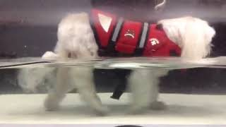Ellie Schmidt- underwater treadmill