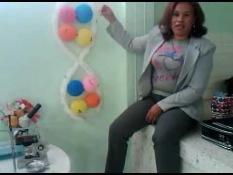 estructura del adn hecha con globos   youtube