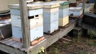 Outside The Hive Comb Experiment